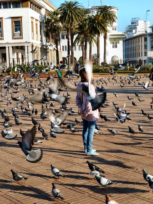 11 janvier 2011 (72) Casa place pigeons